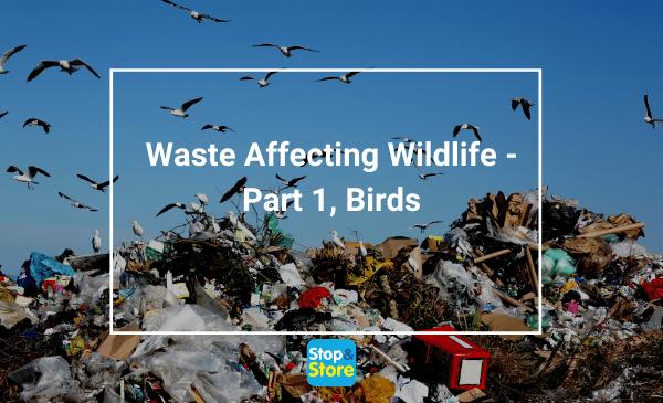 waste affecting wildlife, Waste Affecting Wildlife – Part 1, Birds